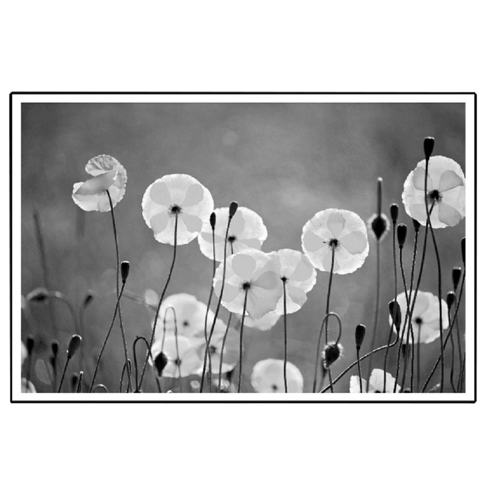 Tablou vitrat imprimat, negru-alb, DX TYP 19 FLOWERS